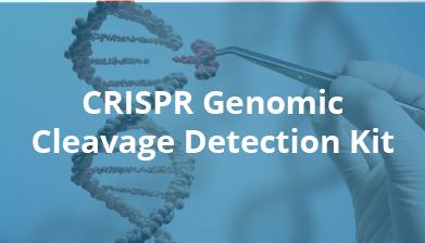 CRISPR Genomic Cleavage Kit