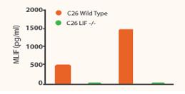 CRISPR KO Results
