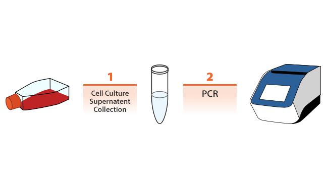 Mycoplasma Detection Service