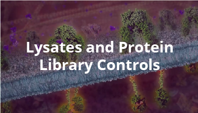 lysates-and-protein-library-controls