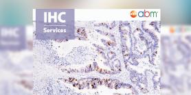 IHC Services Information Flyer