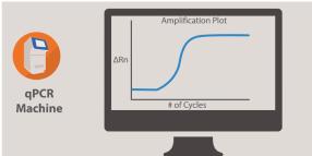 Real-Time PCR/Quantitative PCR (qPCR)
