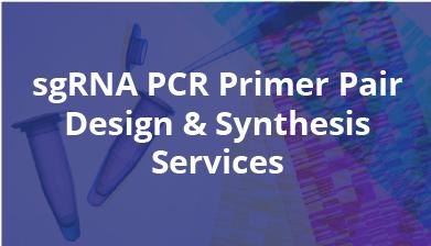sgRNA PCR Primer Pair Design & Synthesis Services