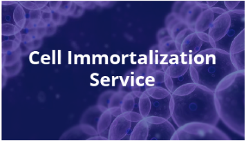 Custom Cell Immortalization