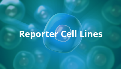 Reporter Cell Lines