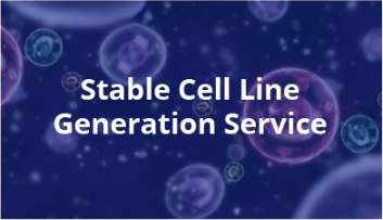 Custom Stable Cell Line Generation
