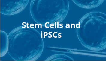 Stem Cells and iPSCs